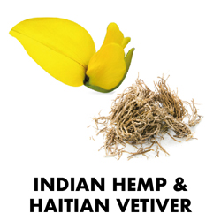 Indian Hemp & Haitian Vetiver