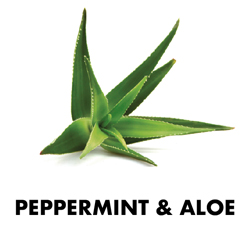 Peppermint & Aloe